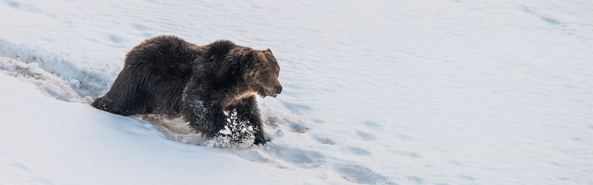 Arctic Grizzly Hunts